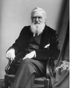 Alfred Russel Wallace, c. 1895